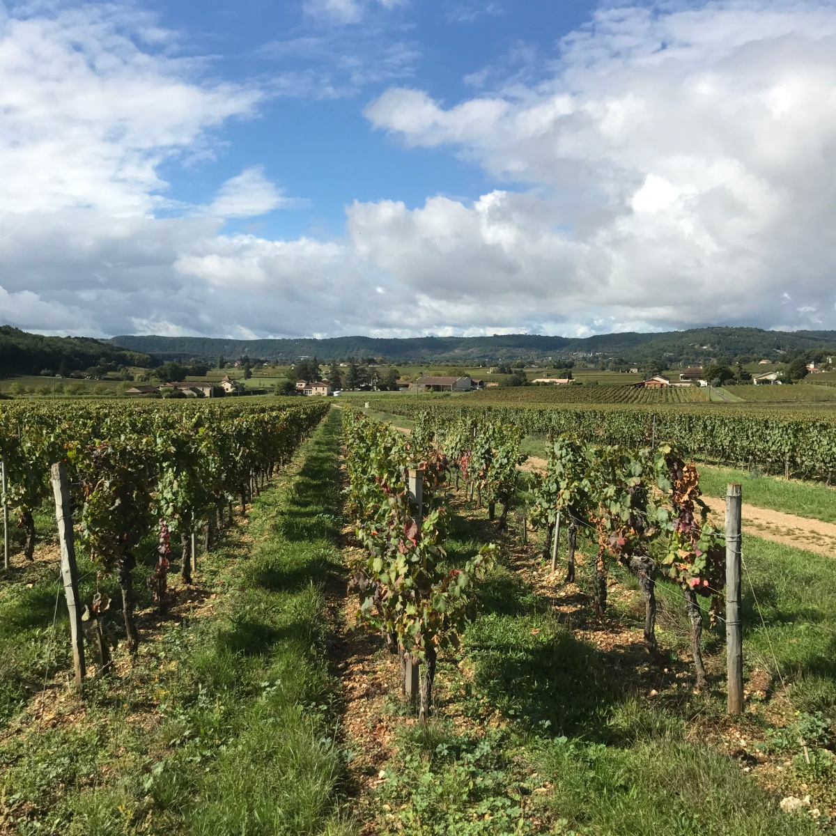 The Wines ofCahors